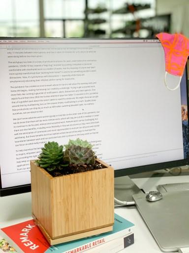Succulent Desktop Garden