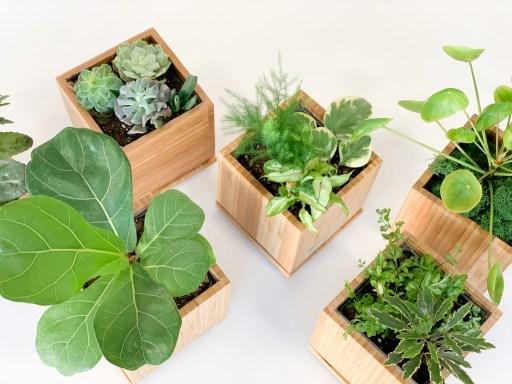 Desktop Garden Collection
