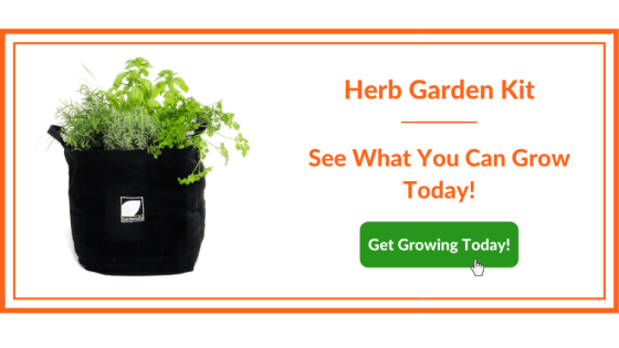 Herb Garden Kit - What Can We Grow