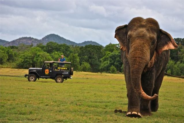 Yala Jeep Safari