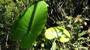 Cát Tiên, nížinný tropický dažďový les