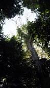 Cát Tiên, strom Tung