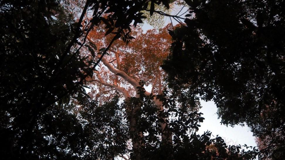 Cát Tiên National Park