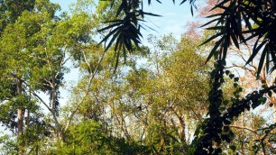 Dao Tien Endangered Primate Species Centre