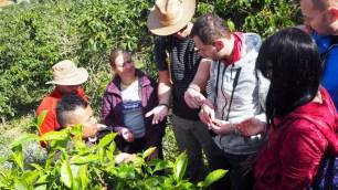 K'HO coffee farm: medzi kávovníkmi