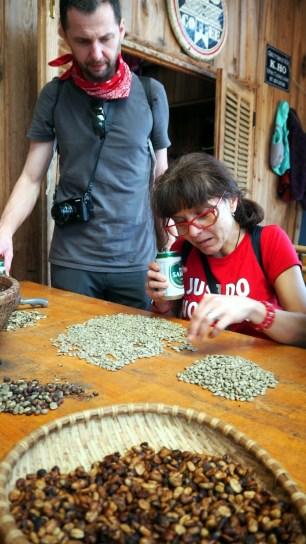 K'HO coffee farm: kontrola kvality