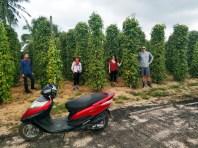 farma s čiernym korením
