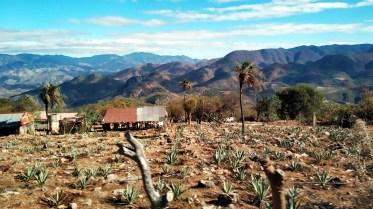 Tule - Mitla - Hierve el Agua