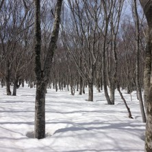 こちらのツリーも雪が走って楽しい!この先のウネった地形も◎