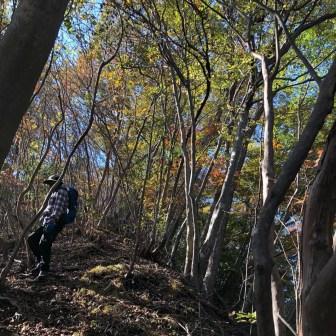 紅葉と緑が混ざった尾根沿いは日差しが差し込みキレイ