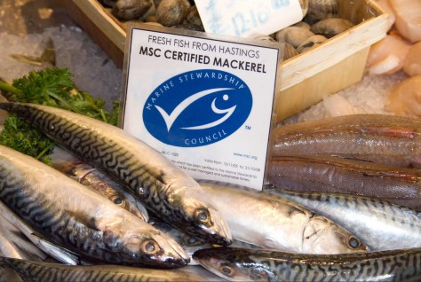 fresh-hastings-fish-marine-stewardship-council-certified-sustainable-bt4837