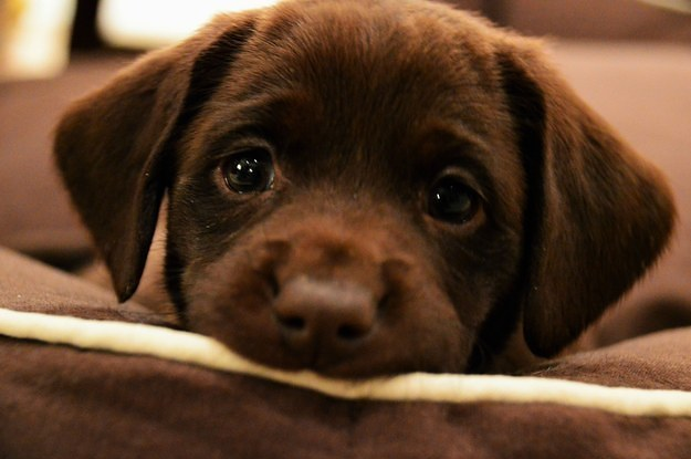 The online puppy scam is back