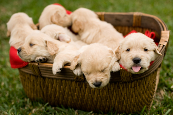 Another craigslist puppy ring results in sick animals