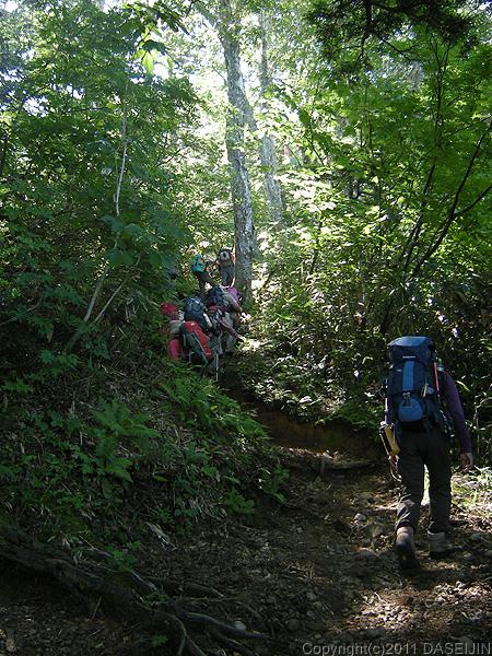 110716太郎平への登山道の始めは樹林帯