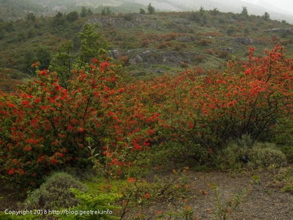 171118 赤い花のところで休憩