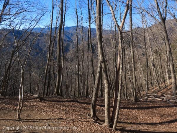 190119 二重稜線の森