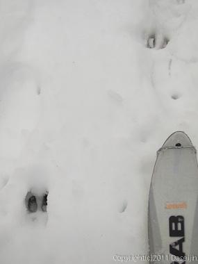 120303富士山・カモシカの足跡