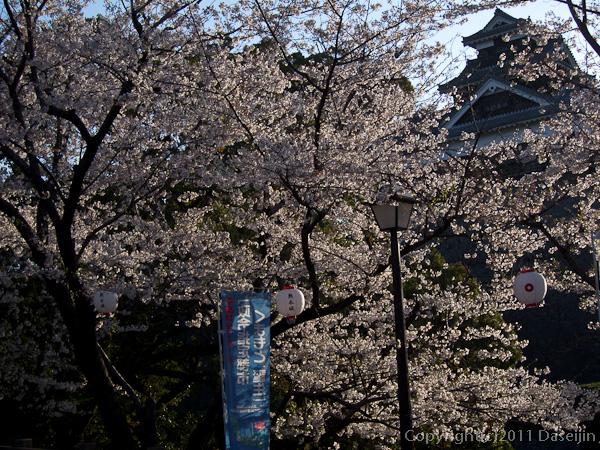 120404熊本・熊本城備前堀の桜2
