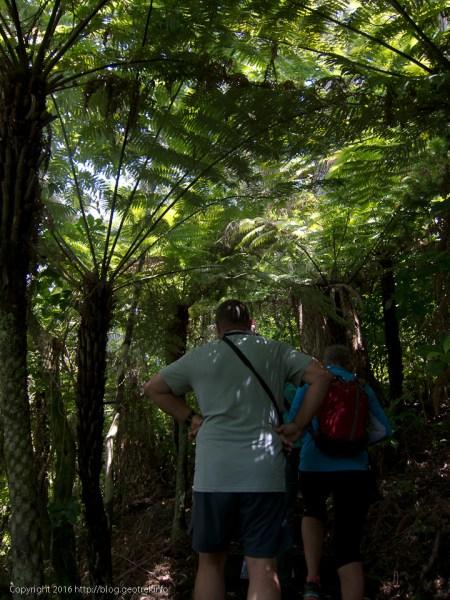 ティリティリマタンギ・アイランド、シダの森
