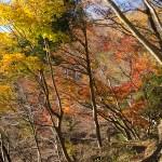 静かな尾根~丹沢・宮ヶ瀬から鍋割山(1)