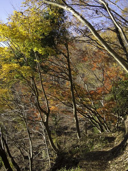 111204丹沢・登山道の紅葉