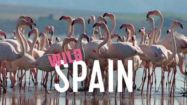 Wild_Spain_Getfactual_1920x1080