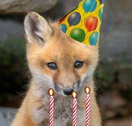 fox borthday