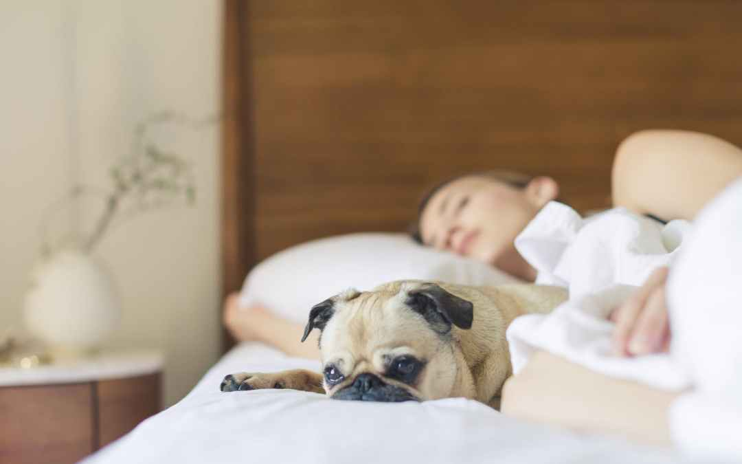 The Doctor's Guide About Testing Sleep Apnea at Home