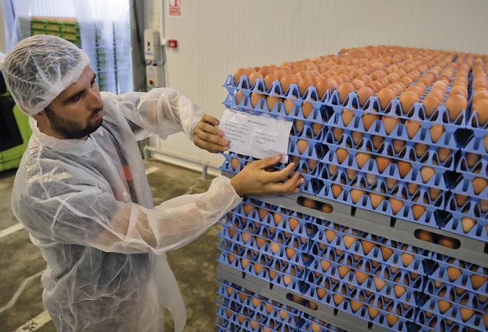 In Belgio allarme uova al fipronil dal 2016