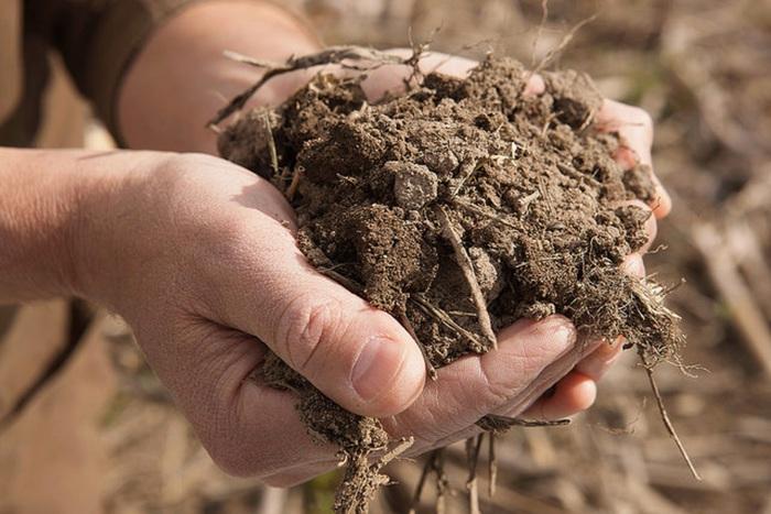 Pronto l'atlante dei batteri del suolo