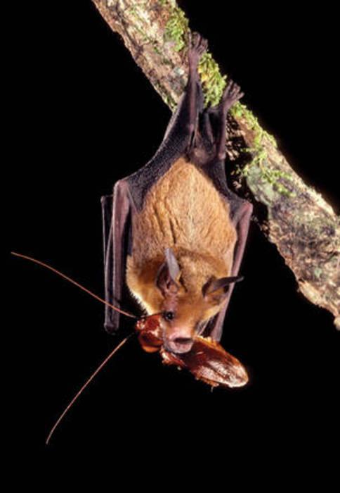 Riso biologico, con aiuto pipistrelli cala impiego pesticidi