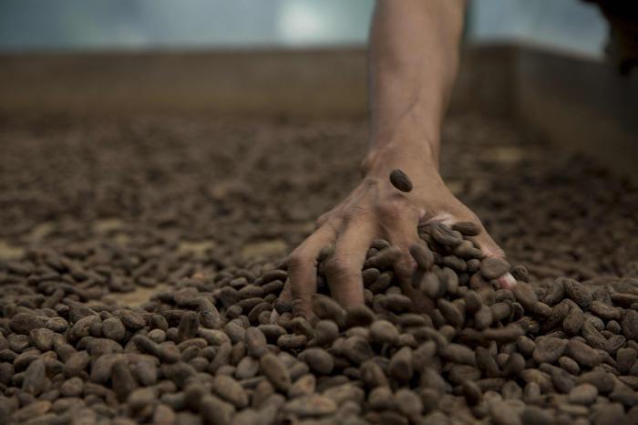 Il cacao più raro al mondo sbarca al Salone del Gusto