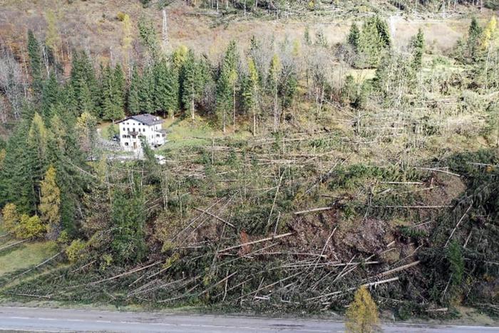 Agronomi e Forestali, maltempo ha spazzato via filiera del legno