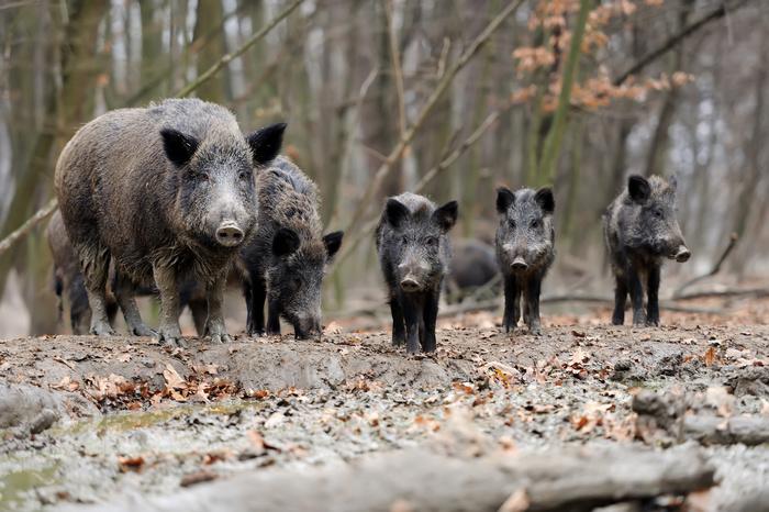 Sos fauna selvatica, Cia lancia la riforma della legge