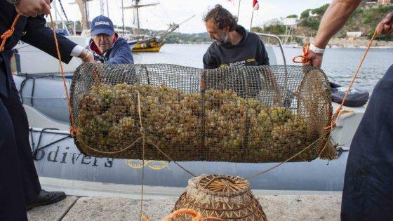 Dall'Isola d'Elba il vino fatto con l'uva che riposa nel mare