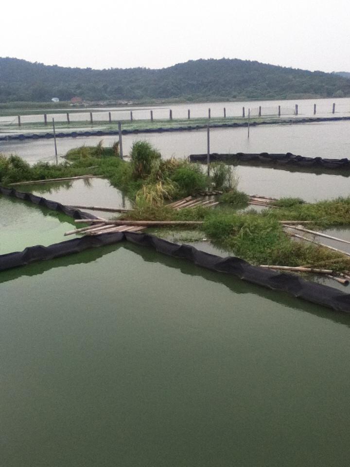 Photo: Lake Taihu research. Credit: Alicia Caruso.