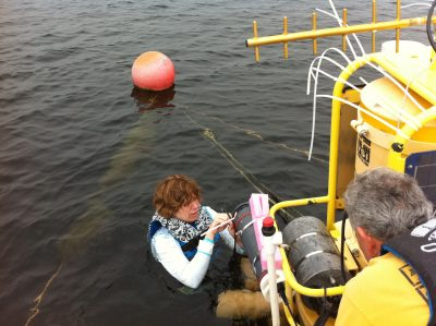 Photo: Evelyn Gaiser repairs temperature sensor on Lake Annie buoy. Credit: FIU News.