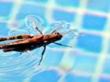 Como se livrar dos insetos na piscina.