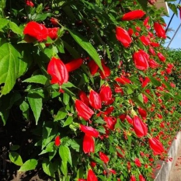 2 - plantas - arbustos2