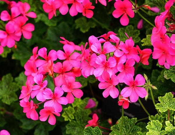 6 - plantas - repelentes
