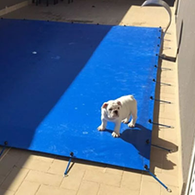 cães na piscina 3