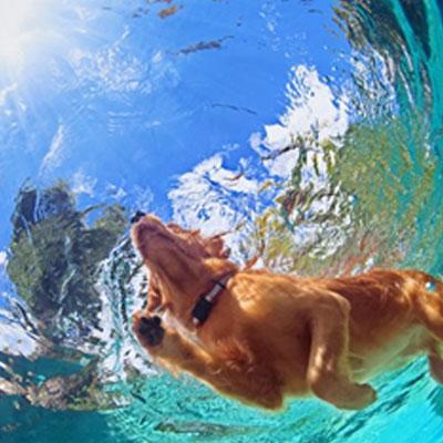cães na piscina 4