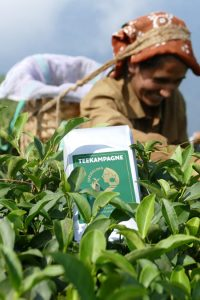 Teekampagne Tee