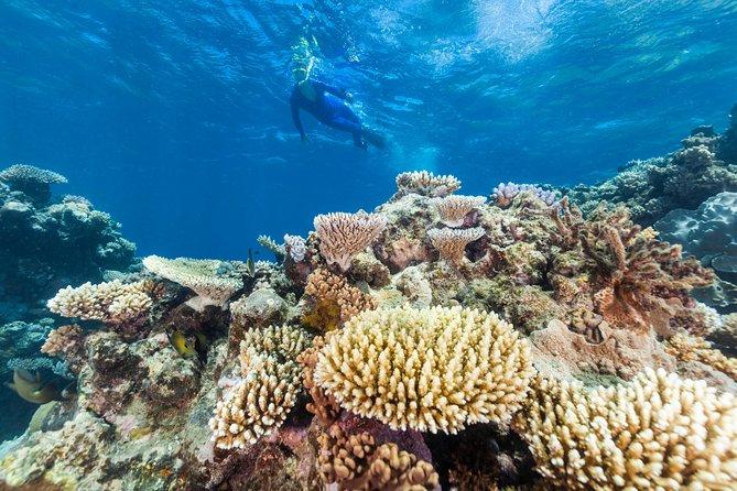 Person snorkeling above coral in Australia