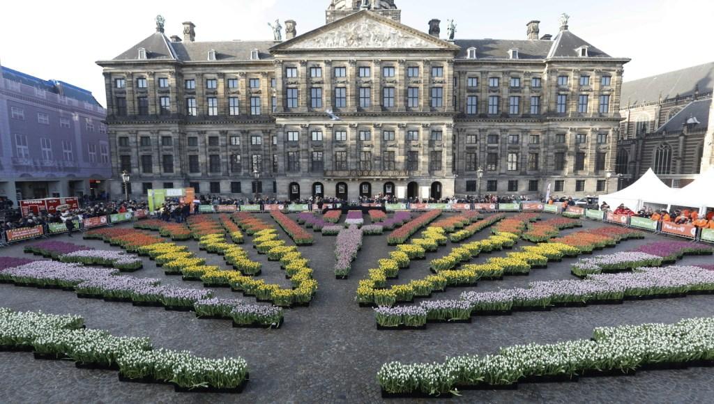 spring tulips in Amsterdam