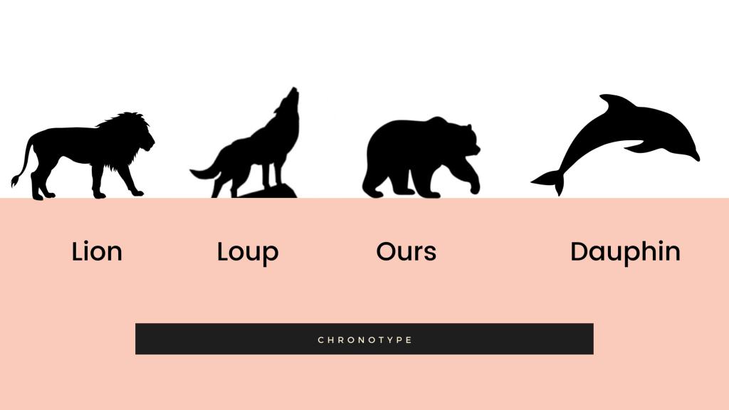 infographie, les différents chronotypes