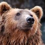 sommeil et travail, l'étude du chronotype : ours