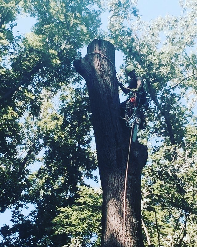 A Talk in the Trees with…Jake Riggs