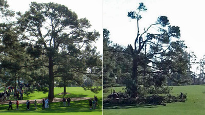 Augusta National's famed Eisenhower Tree is shown as it formerly stood on the 17th fairway (left) and after damage from recent ice storms (right).