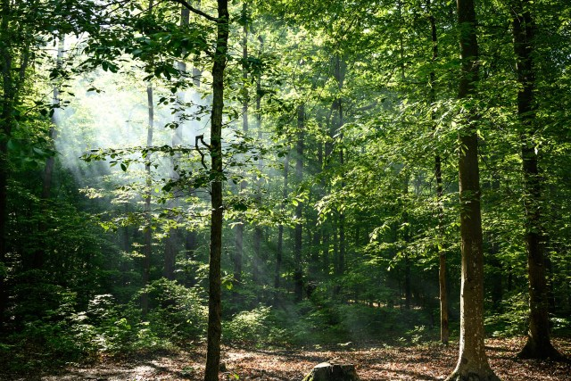 Hikes in Mammoth Cave National Park in Kentucky